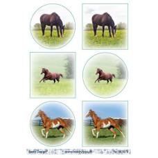 Dyr - Heste