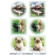 Dyr - Katte
