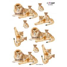 Dyr - Hm Easy - Løver